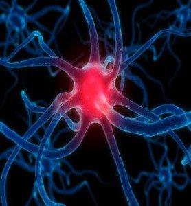 Brain-Biochemistry